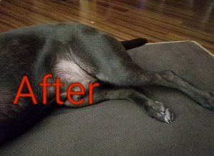 dog skin allergy after cbd oil