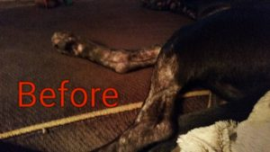 hempworx dog skin allergy