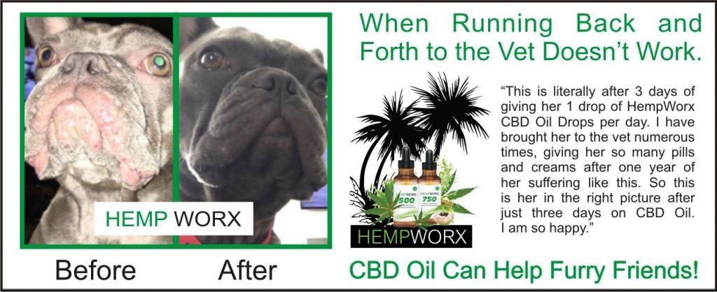 hempworx cbd oil for dogs skin allergy